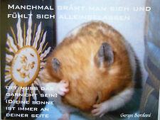 Karte  Lebensfreude Lebenshilfe Weisheit Hamster spirituell VERSANDKOSTENFREI!!