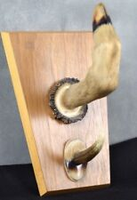 VINTAGE TAXIDERMY Deer Hoof And Antler Wall Hanging  Plaque 7.5 Inches