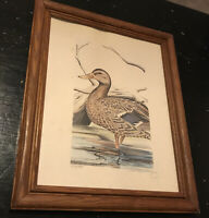 Ted Mcelhiney Artist • Framed Matted Hand Signed Numbered 274/400 Duck In Water