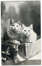 Kittens in a Basket Postcard 1915 - Cute White Long Hair Cats