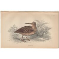 Jardine/Lizars antique hand-colored engraving bird print Pl 11 Woodcock