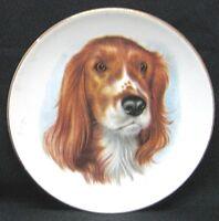 "Duchess Bone China England Dog Plate With Gold Trim 6""."