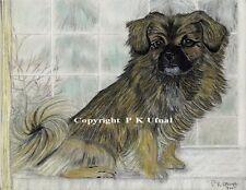Dog Art,Pencil,Pen&Ink,Tibetan Spaniel Print,by PKUfnal
