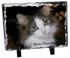 Tabby Cat 'Yours Forever' Photo Slate Christmas Gift Ornament, AC-10ySL