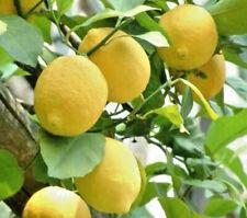Huile Essentielle Citron 10ml pure naturelle