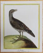 BUFFON oiseaux couleur par MARTINET La Marouette n°751