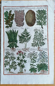 Morandi Historia Botanica Folio Farn Fucus Spongia - 1744