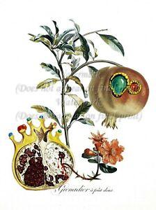 "SALVADOR DALI Botanical Art Poster or Canvas Print ""Grenadier a fruit deux"""