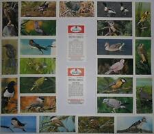 CARRERAS B'CAT *BRITISH BIRDS* 1976 Part-Set 25/50 MINT*