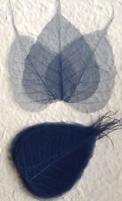 25 Dark Blue Po Bo Banyan leaves skeleton leaf see through Wedding crafts Large