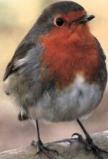 Ansichtskarte: ein pummeliges Rotkehlchen - sehr schönes Porträt - Gorge Rouge