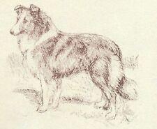 Shetland Sheepdog - Vintage Dog Print - 1954 Megargee