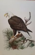 Bald Eagle by Roger Tory Peterson