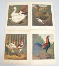 4 Antique Cassell's Poultry Book Color Lithograph Prints Game Cock's Duck Geese