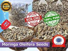 210 x Moringa Oleifera Seeds Pure Organic Quality Herb Health Benefits NON-GMO