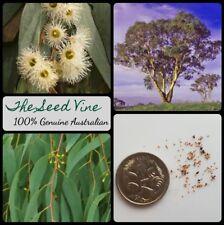 30+ YELLOW BOX EUCALYPTUS TREE SEEDS (Eucalyptus melliodora) Honey