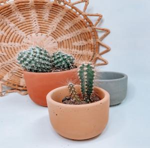Concrete plant pots , Planters that fit the drainage system , Indoor planters