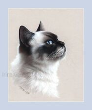 Ragdoll Cat Print Tender by Irina Garmashova