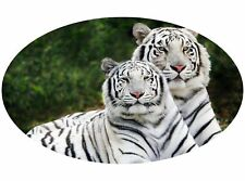 Motor home Caravan Camper Horse box Tiger Stickers Mural Decal Graphic mh1-102