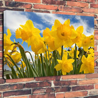 """Daffodils Flowers Easter Welsh Printed Canvas Picture A1.30""""x20""""30mm Deep"""