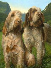 More details for nigel hemming latin spirit italian spinone spinoni gun dogs, limited edition art