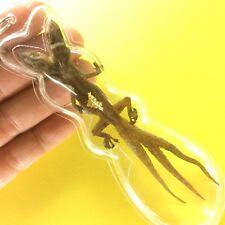 Lizard Gecko Amulet 2 Head 3 Tails Power Pendant Wealth Magic Bet Gambler