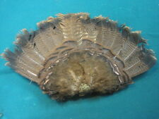 Wild turkey tail full bustle for Native American craft feather animal mount art