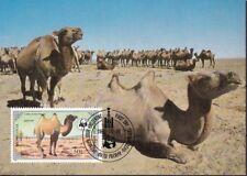 Mongolei 1985 Maximumkarten Satz MiNr. 1707-1710 WWF Hauskamel