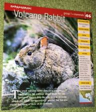 Endangered Animals Card - Mammal - Volcano Rabbit #46