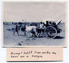 Vintage Foreign Photo: TONGA [Animal-Drawn Carriage]