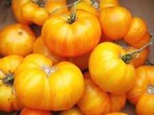 Tomato Orange Jazz organic non gmo Ukraine 20 seeds Farmer's dream