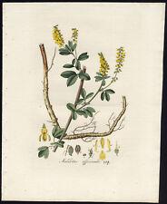 Antique Print-YELLOW SWEET CLOVER-MELILOT-MELILOTUS-319-Flora Batava-Sepp-1800