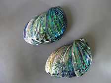 2# Whole Sale 10 Paua Green Abalone Seashell Smudging Sea Shell Don't Miss