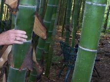 Nos 4 meilleurs pour le jardin; dureté frosthart; Bambou//Banane et encore 2