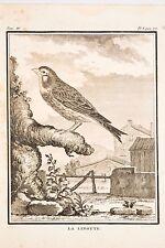 Histoire Naturelle Oiseaux Buffon v 1780 LA LINOTTE Guyot-De Sève