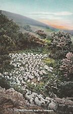 "*Scotland Postcard-""Sheltered Pastures Neat The Trossachs"" (U1-764)"