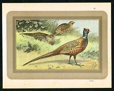 Ring-Necked Pheasant, Cock & Hens, Antique Print, Manufrance St. Etienne 1933