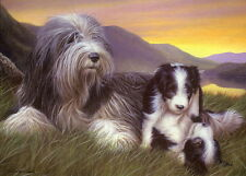 Nigel Hemming SHEPHERD'S DELIGHT Bearded Collie Mother & Litter, Beardies Cute