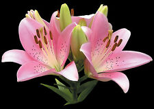 """Retirement Blank Quality Card """"Pink Tiger Lilies"""" Flowers fast Freepost!"""