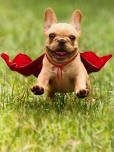 """Super Thanks!"" AVANTI French Bulldog Super Hero THANK YOU CARD"