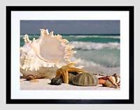 PHOTO SAND CONCH SEASHELLS BEACH SUMMER SHELLS FRAMED ART PRINT MOUNT B12X10007