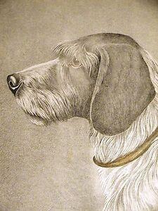 Jean Bungartz Stichelhaar German Pointer 1890 Antique Engraving Dog Print Matted