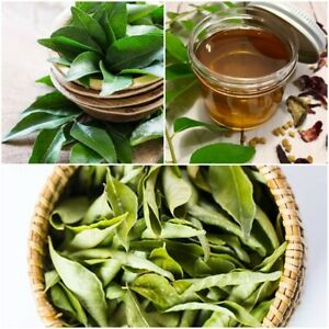 Curry Leaves Organic 50g Premium Herb A Grade Quality Natural Leaves Ceylon 100%