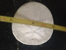 Sand Dollars from California Central Coast-- 2 inch (20)