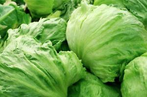 LETTUCE 200+ seeds 'Iceberg' vegetable seeds garden EASY TO GROW beginners