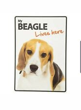 My beagle Lives Here A5 Plastic Sign