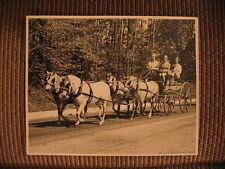 Welsh Mountain Pony Champion Stallions & Jeanne du Pont Original Horse Photo