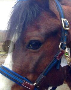 Royal Blue / Blk. Shetland Light-weight  safer Headcollar. Leather & webbing.