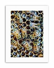 MACRO INSECTS BEES HONEY HIVE HONEYCOMB BUGS APIARY Poster Canvas art Prints