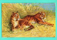 TWO Tiger VINTAGE POSTCARD 310